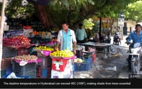 Street traders losing right to shade under trees